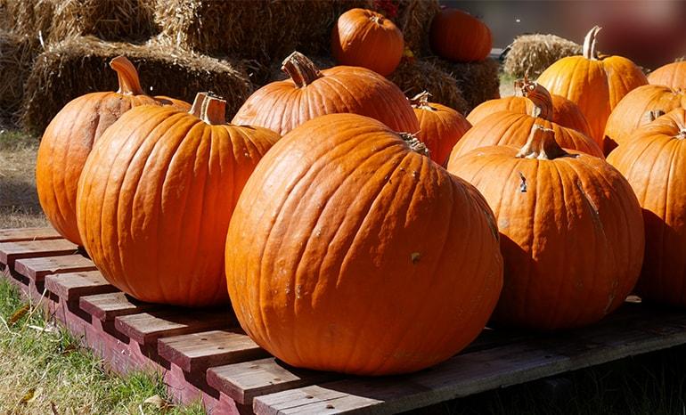 pumpkins sitting on pallet